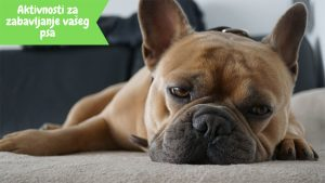 Aktivnosti za zabavljanje vaseg psa blog