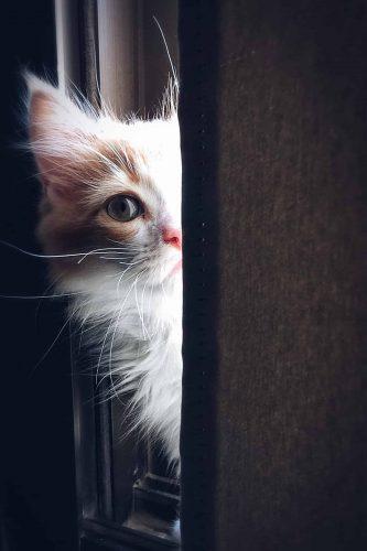 Calibra hrana za mačke